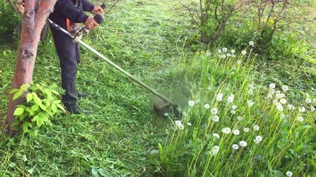 dmuchawiec : Lawn mower man cut grass with electric trimmer. Slow motion Field of dandelions. Man clean green garden nature summer day, Trimmer cut lawn mower tool. Hand trimmer. Blowballs and dandelions meadow