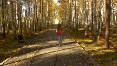 bétula : The camera follows the girl walking along the autumn alley in the park. Yellow leaves fall Vídeos