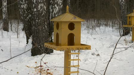 orzechy : Feeding trough for forest squirrels in winter forest or city park
