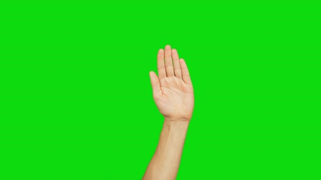 önemseme : White man left hand raised on a green background. Palm of hand. Raised hand moves. Hand rises and falls. Alpha channel, keyed green screen.