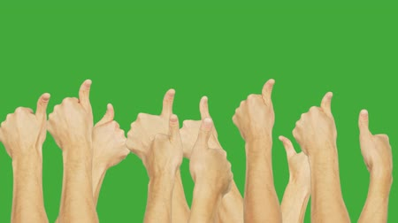 tenso : People group simultaneously showing thumb up on green chroma key background. People hand showing gesture ok isolated on green background. Alpha channel, keyed green screen.