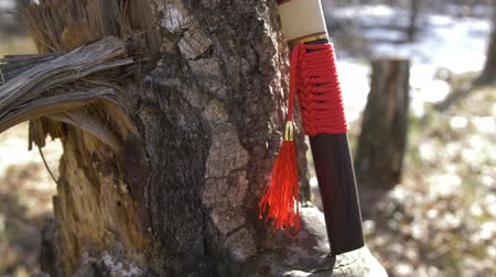samuraj : Japanese short sword with red tassel standing near tree