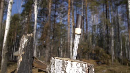 samuraj : Traditional japanese short sword in stump