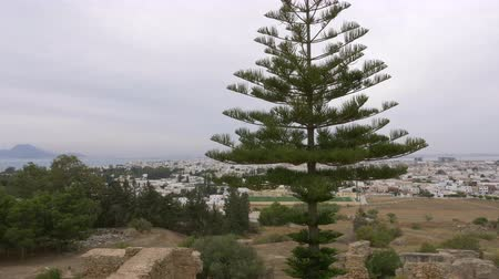 tunisia : Araucaria trees on background city and sea panorama from above Carthage Tunisia Stock Footage