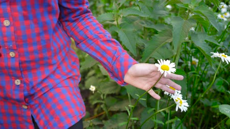 kamilla : Young girl touching white chamomile flowers and green grass with hand sunny day outdoor Stock mozgókép