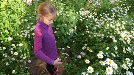 kamilla : Blonde young girl touching chamomile flowers. Top view, top to down shot flowers lawn Stock mozgókép