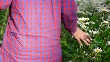 kamilla : Girl in checkered shirt walking and touching chamomile flowers with fear, back view Stock mozgókép