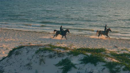 arabian horses : Two horse riders on sea beach in the morning, slow motion Stock Footage