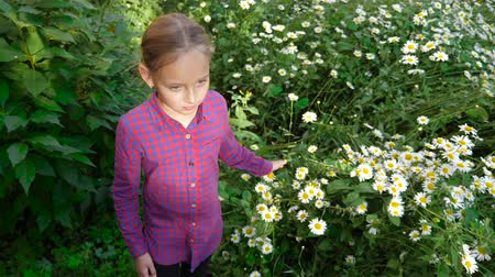 kamilla : Cute teenager girl walking and touching on camomile field top view top-down Stock mozgókép