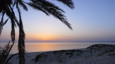 relaks : Palm trees on sandy beach on evening sea landscape timelapse