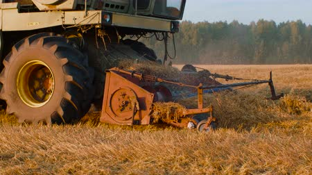 szalma : Industrial harvester harvesting autumn crop on autumn field in countryside