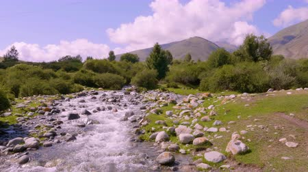 急流 : Stony river flowing in valley on background green forest and mountain peaks. 動画素材