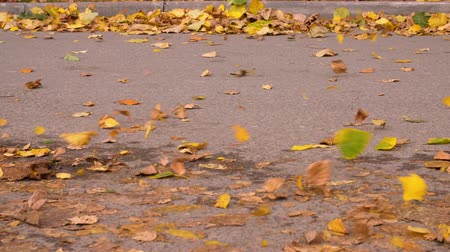 kurak : Wind blow falling leaves at asphalt road in autumn city. Seosonal leaves fall