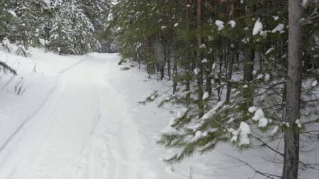 harikalar diyarı : Winter forest path. Snowy way into deep winter woods with pine trees covered with snow. Slow Motion
