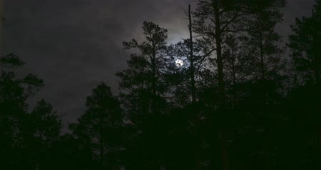 lidércnyomás : Night mysterious panoramic landscape in cold tones - silhouettes of the spruce forest under the full moon and dramatic night sky. Time lapse fast motion