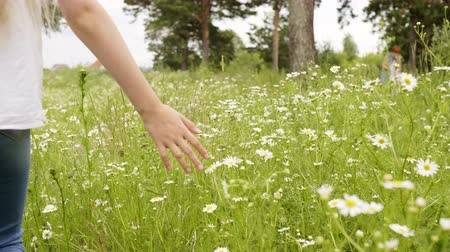 kamilla : Girl Walking Touching Green Grass and Chamomile. Female Hand through Flowers Partial View. Closeup Shot of Child Back Running Palm through Sunny Meadow. Kid on Daisy Field on Summer Day