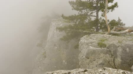 snag : Natural stone rocks in white mist. Beautiful nature mountain landscape with lonely green coniferous tree and snag on edge of cliff in thick fog. Tilt shot, camera moves from bottom to up.