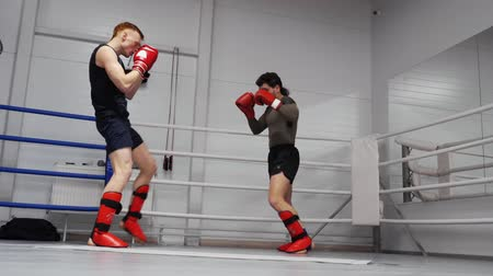 lutador : Kickboxers Fight Train Sport Ring Workout Session. Caucasian Athletes Exercise Low Kicks Physical Activity Competition. Sportsmen Limber-up Practice Martial Arts Healthy Lifestyle Strategy