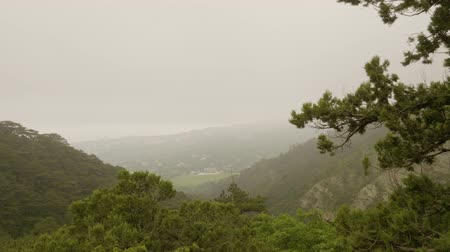 lowland : Panoramic view on green ravine among mountains covered with trees. Beautiful view on green gorge mountain in fog, panning shot. Foggy day high in the mountains. Nature background.