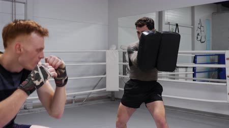 boksör : Man boxer kicking boxing pads by legs at personal training with coach. Fighter training hit to kick pads on boxing ring in fight club. MMA training in gym