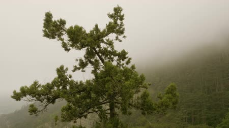 склон холма : Overcast weather in mountains valley. Panorimic view of mountains with forest covered by dense fog beautiful nature landscape. View on hillside covered by wood in dramatic haze and mist.