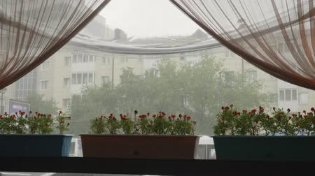 nedvesség : View through cafe window on summer rain at city street. Flowers pot standing on window sill on rain background. Sound included