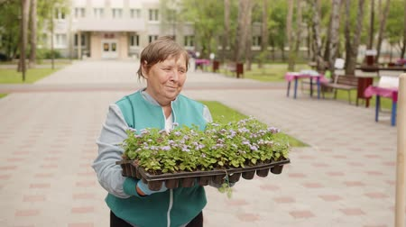 bahçıvan : Gardener Woman Walk Flowers Box City Park Greenery. Mature Female Adult Group Plant Floral Cultivation Skills Soil Background. Groundkeeper Activity Spring Time Grass Weed Horticulture Concept