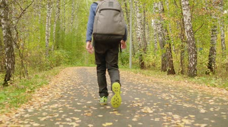 boyhood : Back view of boy with backpack walking in forest. Low angle view of teenage boy wearing backpack and walking in beautiful autumn park, rear view Stock Footage