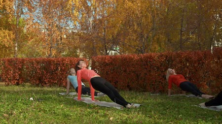 jimnastik : Fitness group working out in beautiful autumn park. Athletic flexible women in sportswear exercising on yoga mats on meadow in autumn park Stok Video