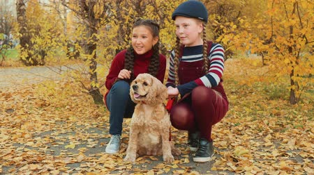 spanyel : Two girl teenagers sitting with cocker spaniel dog in autumn park. Smiling girls stroking dog and posing for camera in yellow autumn park Stok Video
