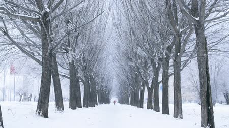 noel ağacı : Scenic view snowy tree alley in winter city while snowfall. People walking on winter tree alley covered winter snow in snowy city