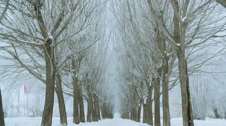 maravilhoso : Tilt shot of beautiful snow-covered trees on winter alley. Majestic natural view of tree twigs covered with snow during scenic snowfall at wintertime