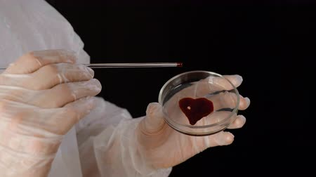 bioquímica : Blood stain in heart shape on medical glass dish in hands bioengineer at chemical laboratory. Medical worker doing blood test in white suit and gloves in science lab on black background Vídeos
