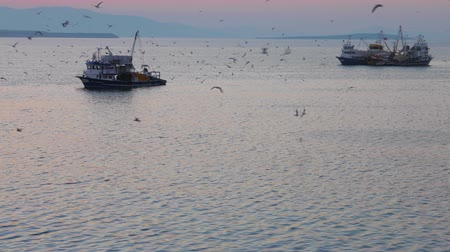 fishing industry : Fishing trawlers surrounded by many birds in the morning before the sunrise with the grey sea and sky on the background. 4k. Other camera movements, raw flat color, frame rates, formats, and resolutions are available upon request.