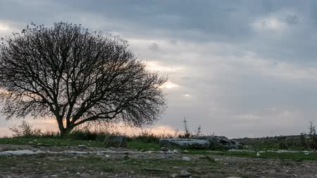 szürkeárnyalatos : Awesome alone black tree with stormy sky and meadow. Time lapse, 4k. Other camera movements, raw flat color, frame rates, formats, and resolutions are available upon request.