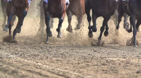 talaj : many of racehorses epic galloping run a closeup of the horses legs and hooves, slow motion