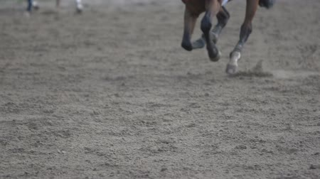 tisztaság : the horse runs gallop, slow motion 240,close-up of the hoof