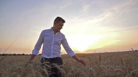man touches both hands to the ears of ripe wheat in a field, a farmer inspects a crop at sunset ,slow motion