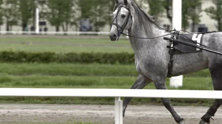 související : Closeup of head grey color horses running in the race,slowmotion
