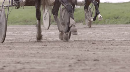 související : many race horses hooves running across the race track, slow motion