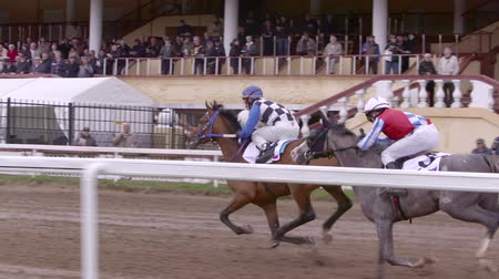 MOSCOW - CIRCA MAY 2015 , Moscow, central Moscow hippodrome,MAY 2015, running Horse Slow Motion,gallop to the finish line
