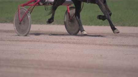 stallion : Horse racing close-up of the wagons and the hooves of a running horse Stock Footage