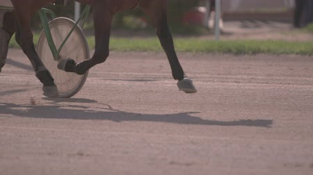 pista de corridas : Horse racing close-up of the wagons and the hooves of a running horse Stock Footage