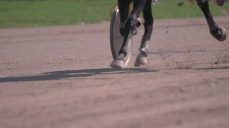 jogos de azar : Horse racing close-up of the wagons and the hooves of a running horse Stock Footage