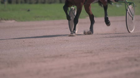 beygir gücü : Horse racing close-up of the wagons and the hooves of a running horse Stok Video