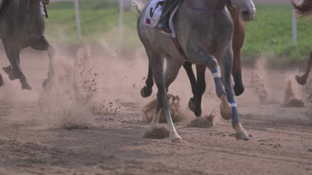 trecho : Moscow,Russia, Central Moscow Hippodrome,MAY 2015racing of thoroughbred horses, slow motion,close up