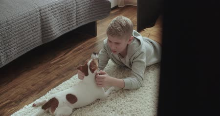 av köpeği : 4k,The teenager is in her room playing with a pet Jack Russell Terrier dog Stok Video
