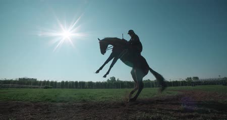 horse racing : silhouette naughty, powerful horse with rider stands up on its hind legs
