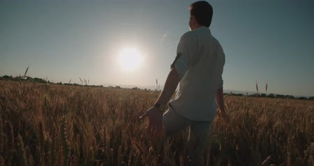 iluminado para trás : Man Walking And Raising Hands in the wheat Field at Sunset Time,slow motion