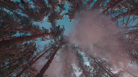 slider shot : majestic snowy forest in a Sunny winter day, the snow fall on the camera,slow motion, low angle, wide shot